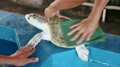 Washing Turtle shell Stock Footage
