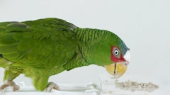 Parrot Eating Seeds (HD) Stock Footage