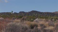High Desert With Joshua Trees 10 Stock Footage