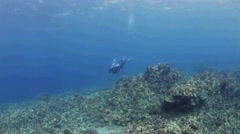 Lone Diver on a Hawaiian Reef Stock Footage
