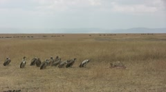 Cheetah eating while vultures move closer, part 3 Stock Footage