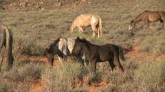 Monument valley wild horses 02 HD Stock Footage