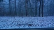 Stock Video Footage of Mammoth Cave Blizzard as Seen Through the Trees