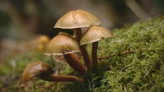 Mushrooms in forest Stock Footage