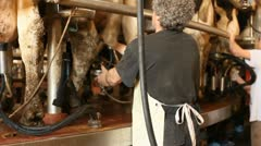 Milking Cows in the farm Cow Milk dairy barn cowshed Stock Footage