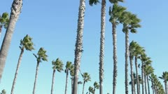 Rows of Windy Palm Trees Stock Footage