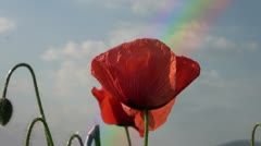 Rainbow poppies red Stock Footage