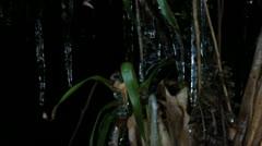 Ice plants 3 140112 Stock Footage