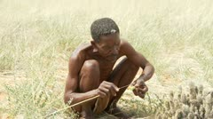 Kalahari bushman cleans hoodia plant medium shot Stock Footage