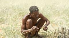 Kalahari bushman cleans hoodia plant medium shot - stock footage