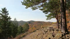 Coniferous wood in mountains 1 - stock footage