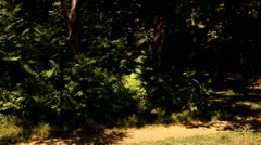 Clown jump on background of the foliage Stock Footage
