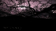 Timelapse thunderstorm with leafless bare tree Stock Footage