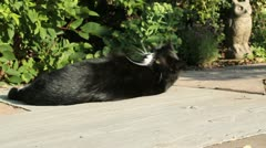 Cat Relaxing in Sunshine HD File Stock Footage