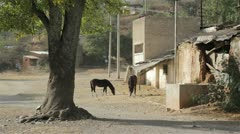 Mexico Hacienda in Desert Stock Footage