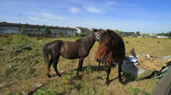 Horses in a Town Paddock in Ireland GFHD Stock Footage