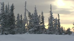 Sunset in the winter forest Stock Footage