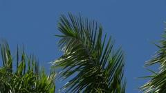 Palm Tree Closeup 5 - stock footage