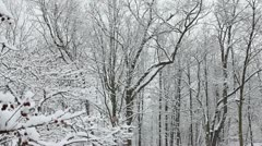 Snow Falling On Trees HD Stock Footage