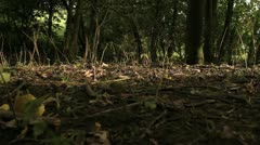 Tree Falling Down to Woodland Floor and Breaking Up HD File - stock footage