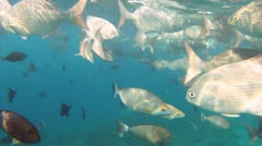 Shoal of fishes 02 Stock Footage