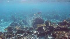 Fish 01 Stock Footage