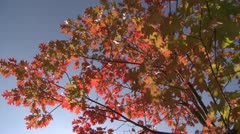Stock Video Footage of Front Porch Oak PST 0471 01