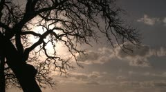 Winter oak sun branches silver blue clouds Stock Footage