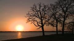 Winter oak silhouette golden sunset Stock Footage