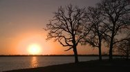 Winter oak silhouette golden sunset Stock Footage