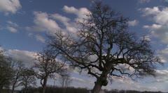 winter oak clouds - stock footage