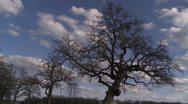 Winter oak clouds Stock Footage