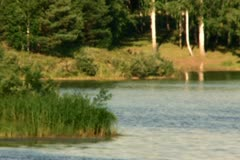 Lake in forest Stock Footage