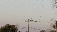 Birds on a telephone line Stock Footage