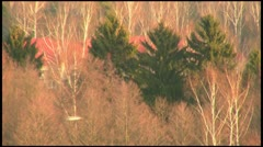 Two birds fly rapidly over the treetops in the Undergrowth Stock Footage