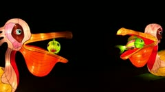 Chinese Lantern Of Two Pelicans - stock footage