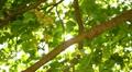 Tree Sunlight 02 Slow Motion 60fps HD720 Footage