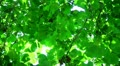 Tree Sunlight 03 Slow Motion 60fps HD720 HD Footage