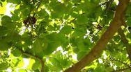 Tree Sunlight 04 Slow Motion 60fps HD720 Stock Footage