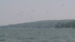 Birds flying over the river on a hazy day Stock Footage
