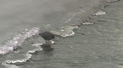 P01773 Dipper Diving in Water and Coming Out Stock Footage