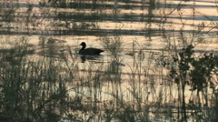 Duck on the Sea of Galilee Stock Footage