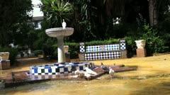 Pigeons Eating Near a Bird Bath Stock Footage