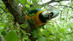 Big Beautiful parrot on a tree look to the camera Stock Footage