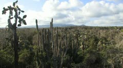 Galapagos Cacti Landscape Stock Footage