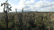 Stock Video Footage of Galapagos Cacti Landscape