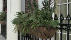 Stock Video Footage of Evergreen Window Planter