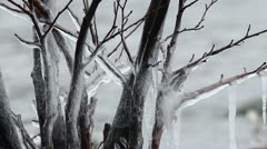 Ice trees 3 - stock footage