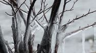 Stock Video Footage of Ice trees 3