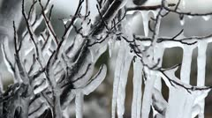 Ice trees - stock footage